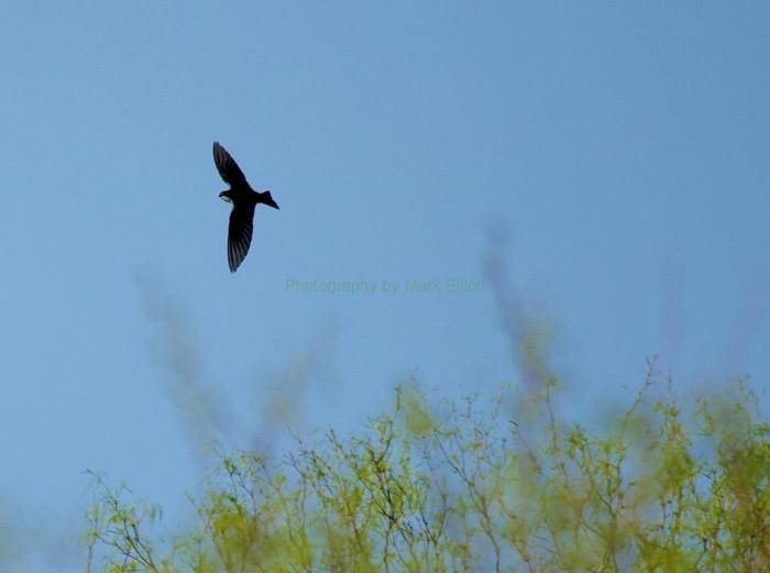 tree-swallow-12-1280x954