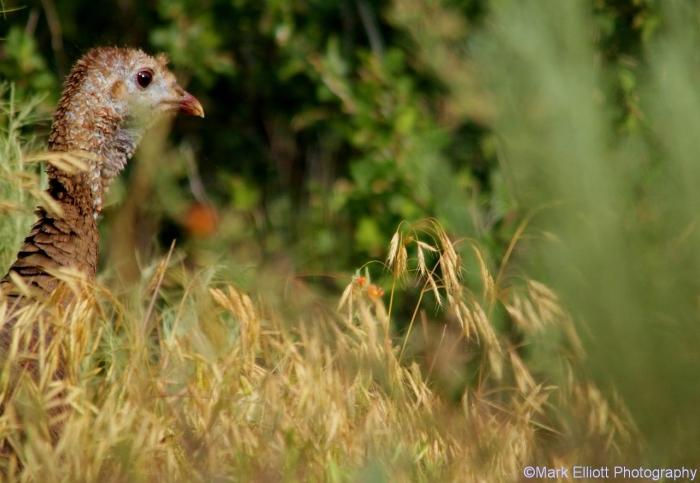 wild-turkey-18-1280x884