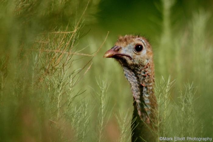 wild-turkey-19-1280x855