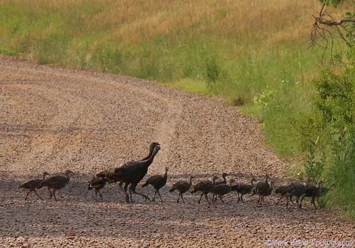 wild-turkey-28-1280x896
