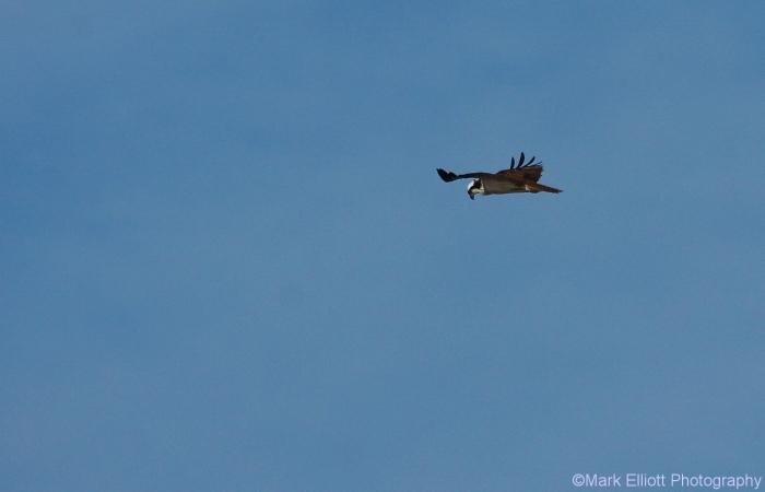 osprey-10-1280x823