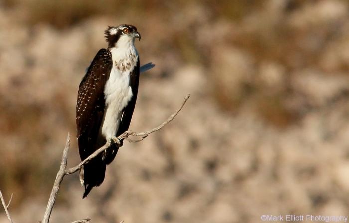 osprey-23-1280x819