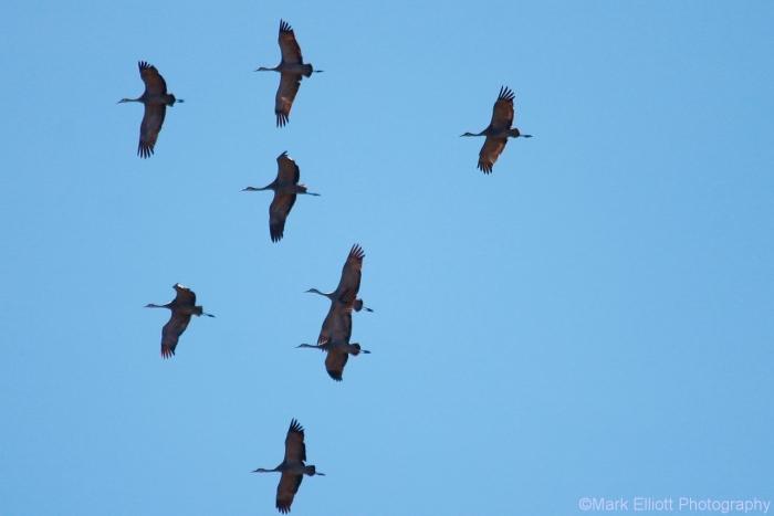 sandhill-crane-3-1280x854