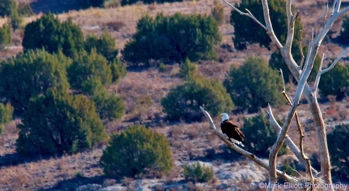 bald-eagle-370-1280x749