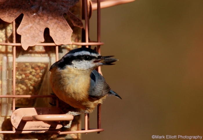 red-breasted-nuthatch-3-1280x888