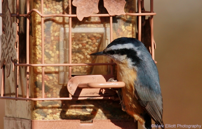 red-breasted-nuthatch-5-1280x820