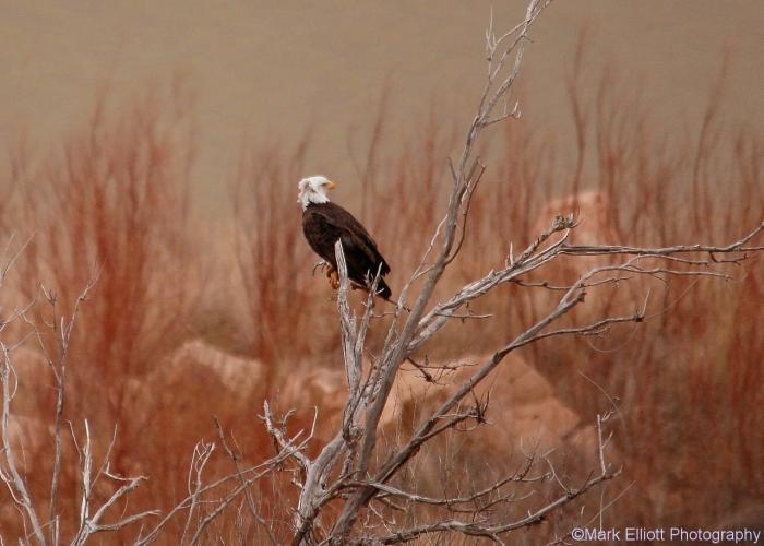 bald-eagle-393-1280x916