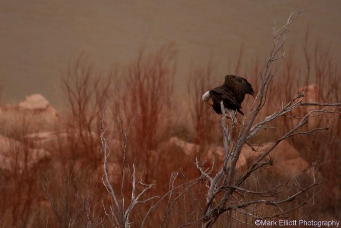 bald-eagle-398-1280x854