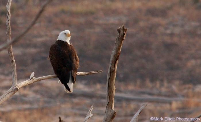 bald-eagle-403-1280x778