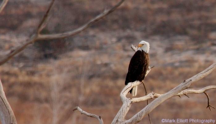 bald-eagle-404-1280x734