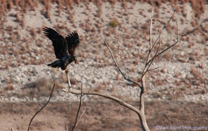 bald-eagle-358-1280x804